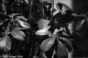 Closer Ficus
